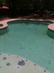 Before Tucson pool cleaning