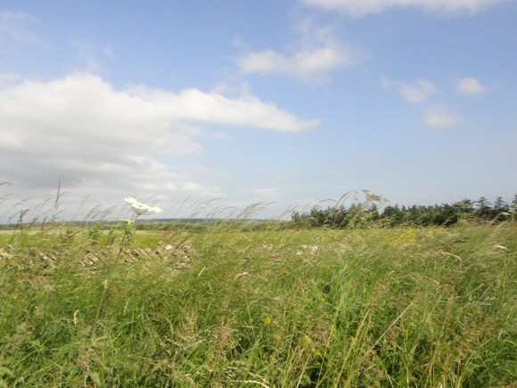 View across verge and farmland 1