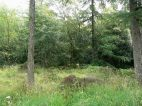 Heathland and scattered trees