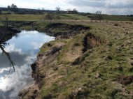 River Esk near Danby before river restoration work - slumping river bank acts as a source of sediment - lack of vegetation and trees to stabilise the bank.