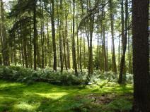 Low Wood, Bilsdale - copyright NYMNPA