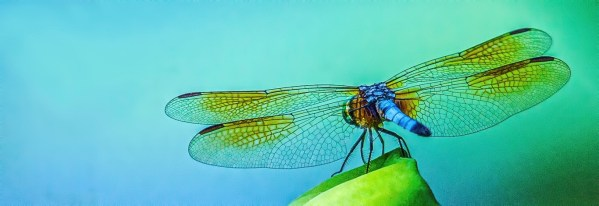 photo of dragonfly with blue and green background titled Dog Days Of Summer by Charles Dana