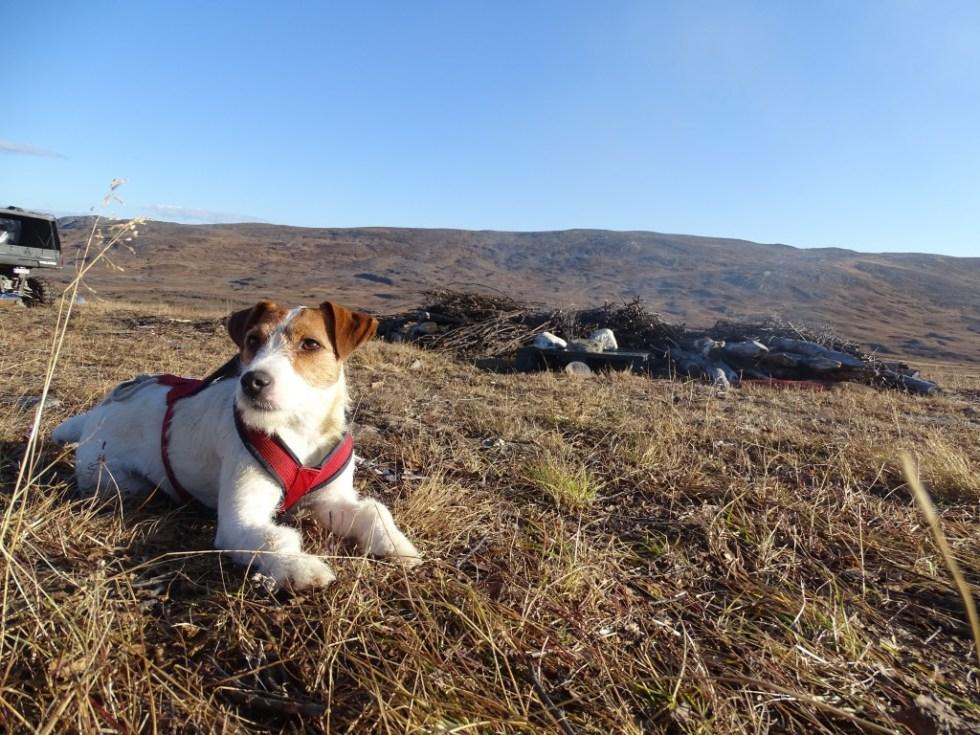 Yr på fjellet i Nord Troms