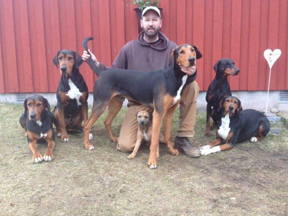 HolHound doberman hunder til revejakt