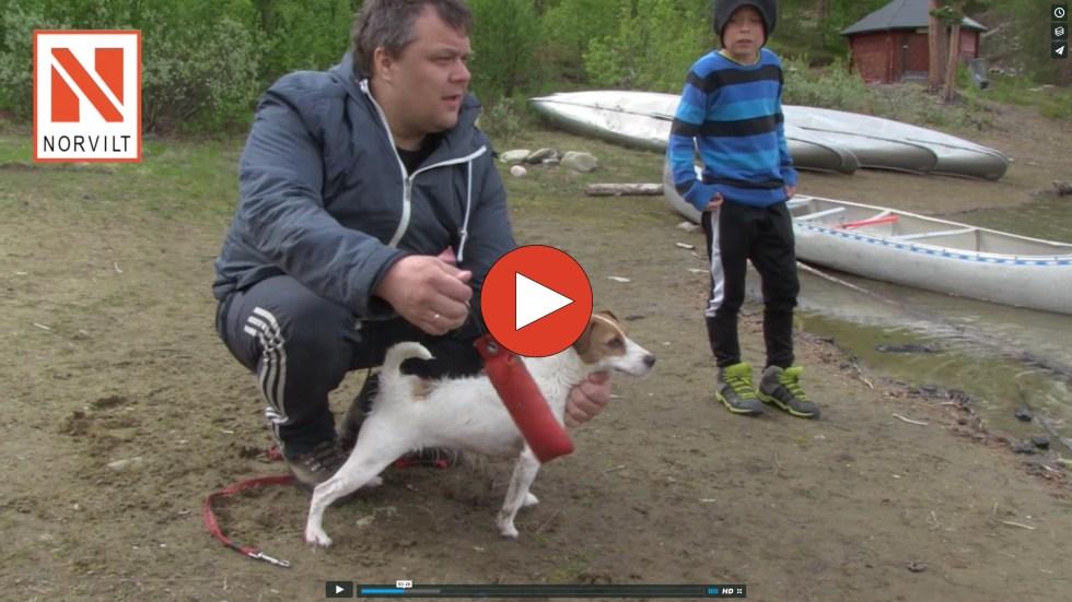 1 - Apporttrening Parson Russell Terrier