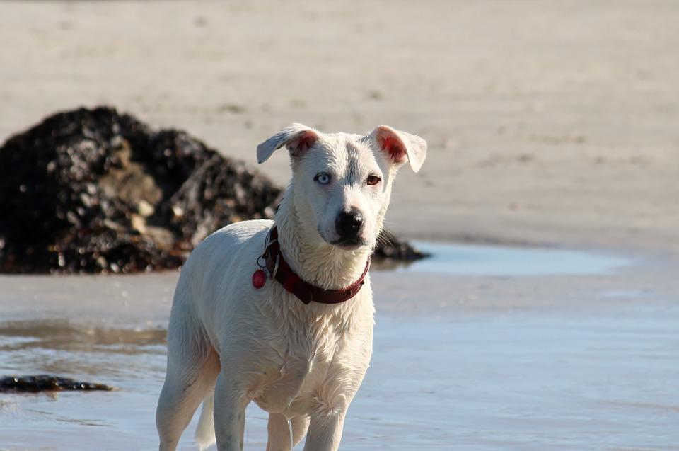 Blandingshund av diverse raser