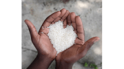 charity rice hands