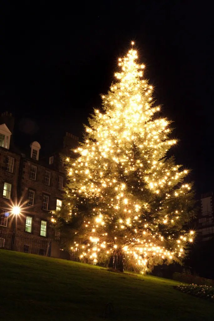 Image result for edinburgh christmas tree mound