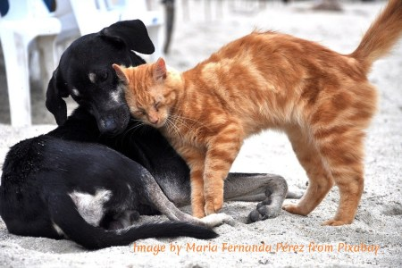 Dogs and cats loving each other