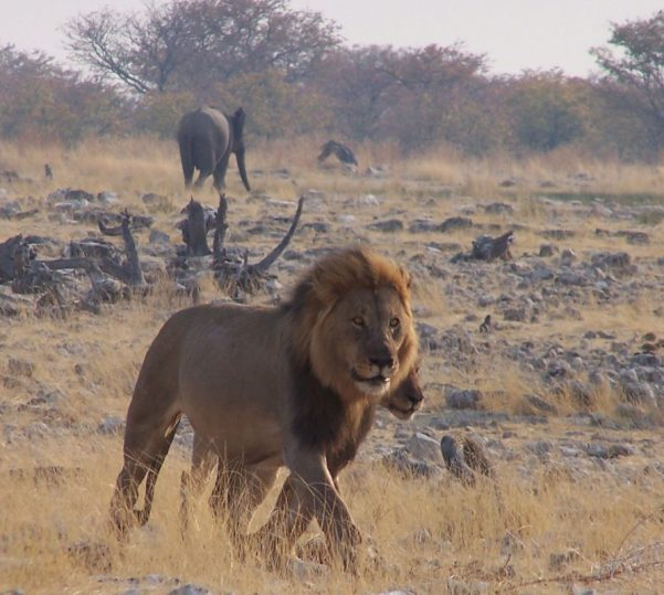 Con EL PIXEL VIAJERO nos vamos a... NAMIBIA Y SUDÁFRICA