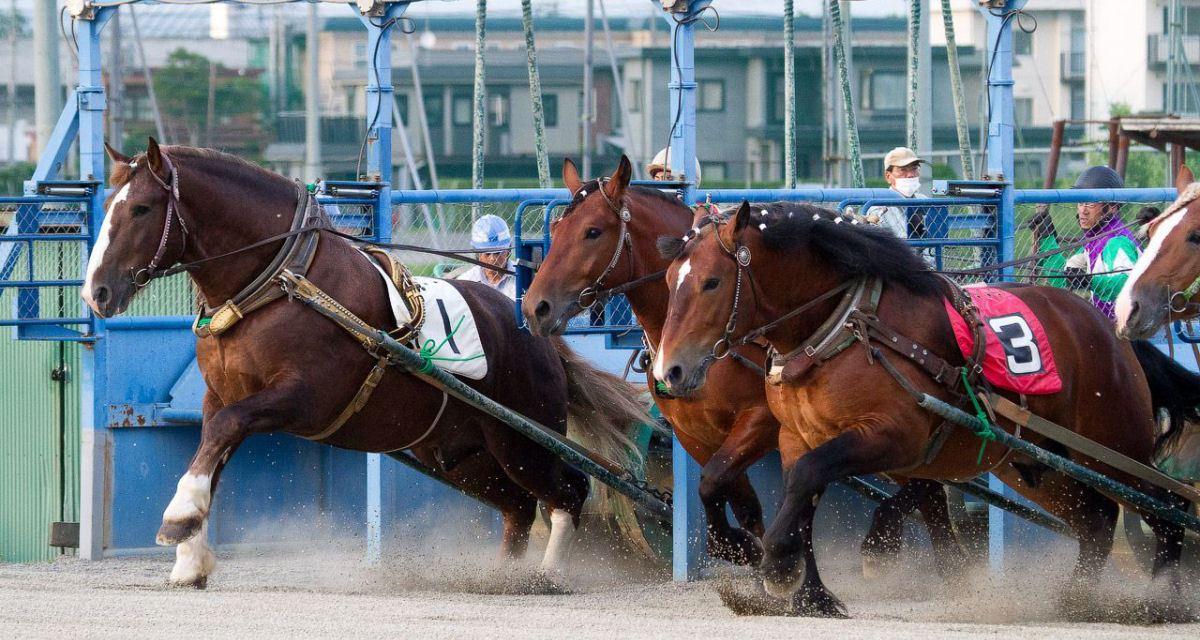 Conheça a corrida de cavalos mais lenta do mundo