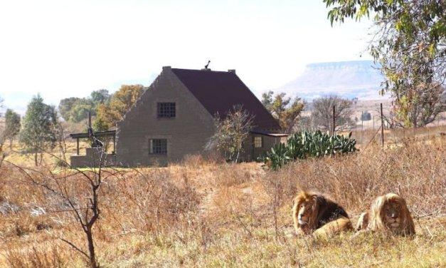 The Lion House permite que você passe as férias no meio da savana africana – e com leões!