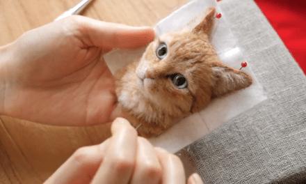 Artista japonesa faz retratos ultrarrealistas de gatos com lã