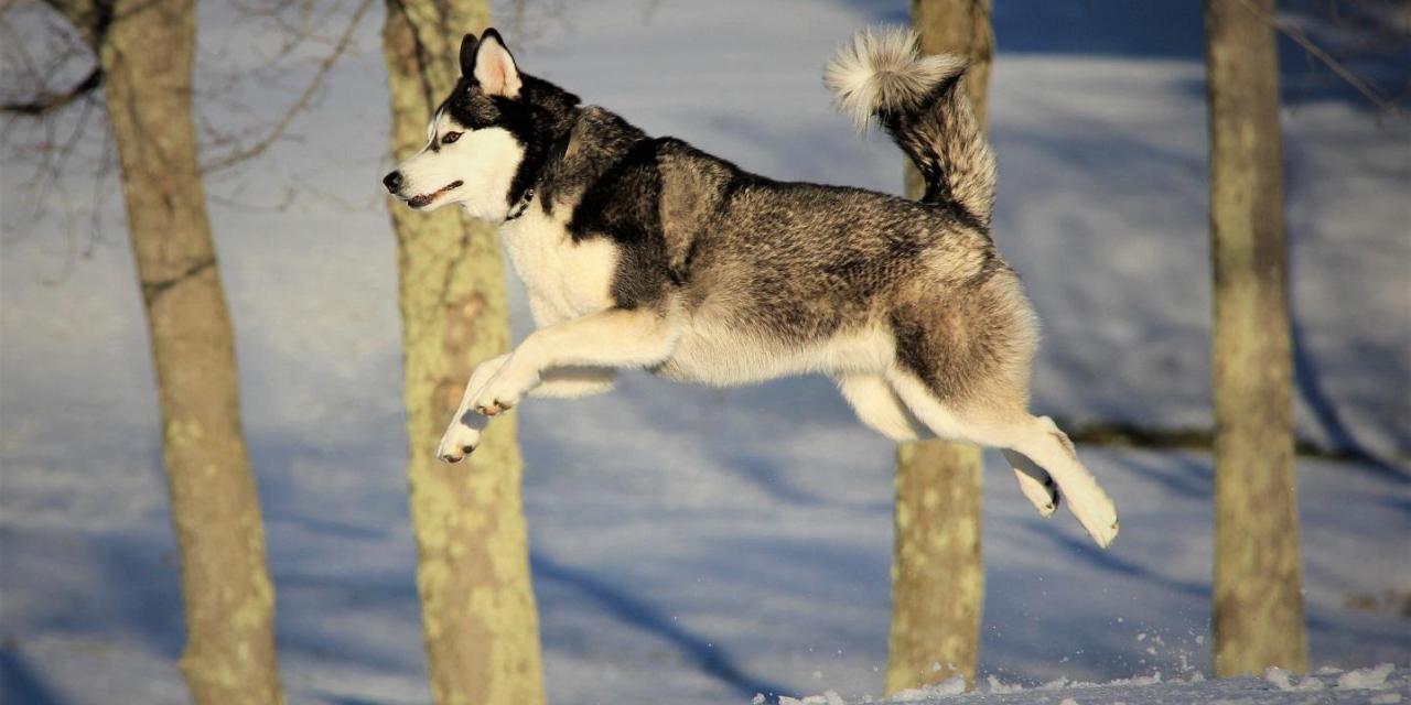 Cachorro repleto de saudades salta do segundo andar para cumprimentar o dono que acaba quebrando o pescoço