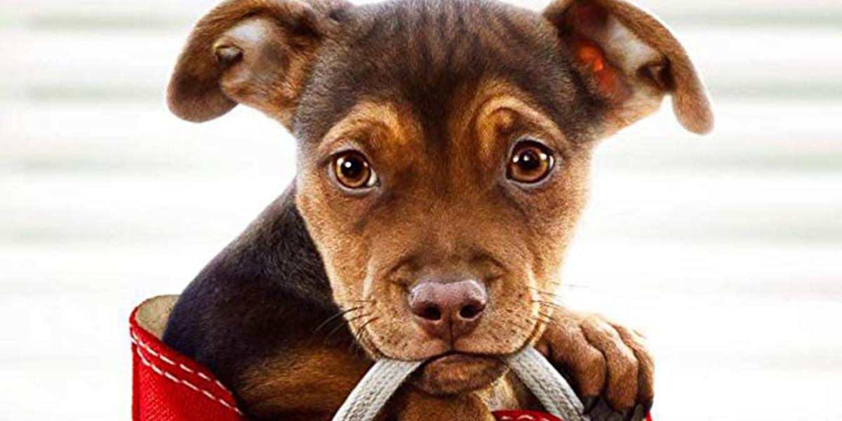 Crítica | A Caminho de Casa – Uma cachorrinha fofinha em uma história morna