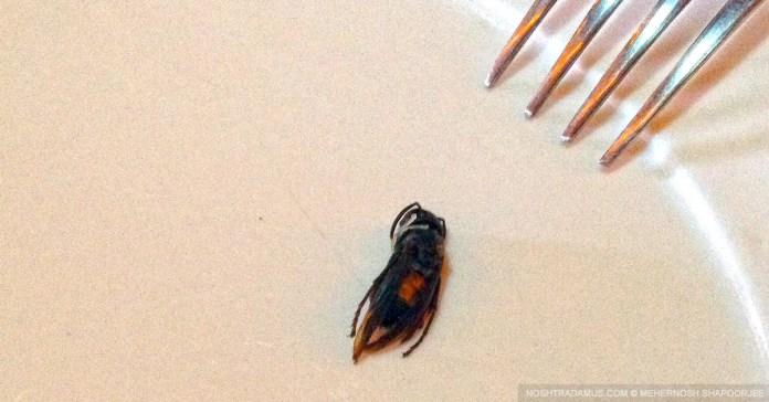 Just Bee-eat It! Naga Style.