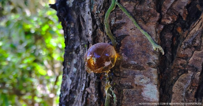 Nature is bursting out, everywhere in Meghalaya