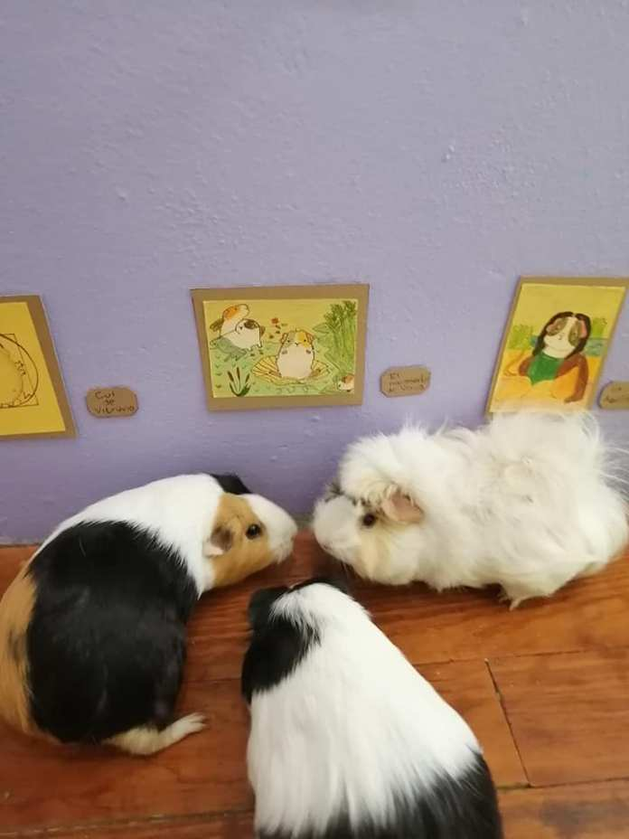 Exposición temporal Cui 20: una usuaria de Facebook recrea pinturas icónicas para sus cuyos 13