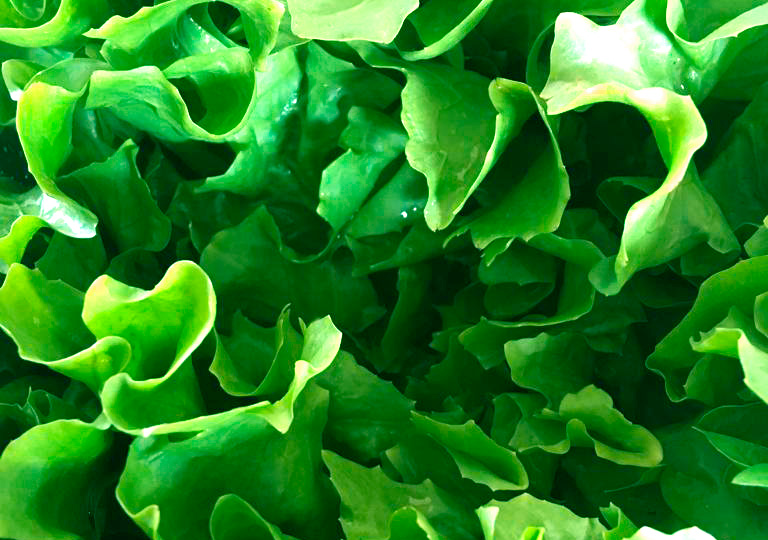 produtos orgânicos sustentáveis biodinâmicos