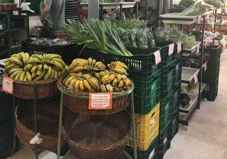 Curitiba o que fazer organicos