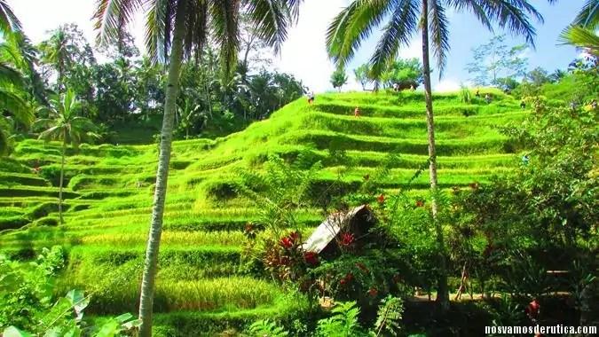 Arrozales en terraza en Tegalalang