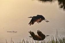 #13 Great Blue Sunrise Reflections