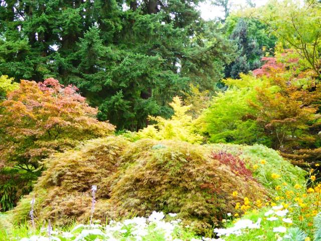 Maple Gardens at VanDusen Botanical Gardens in Vancouver