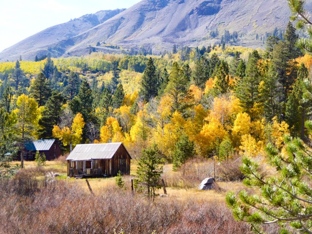 Fall Colors at the Cabin at Red Lake, Hope Valley, California