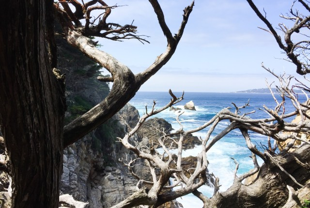 The Cypress Grove Trail at Point Lobos State Reserve