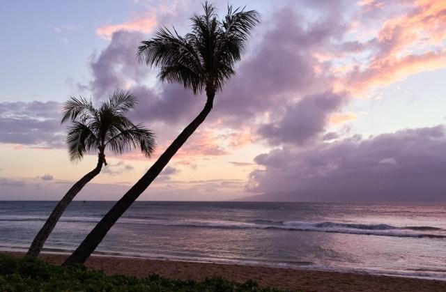 The crooked palms at Kaanapali Beach in Maui Hawaii