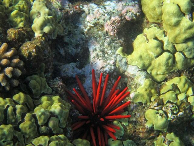 Coral Maui Hawaii