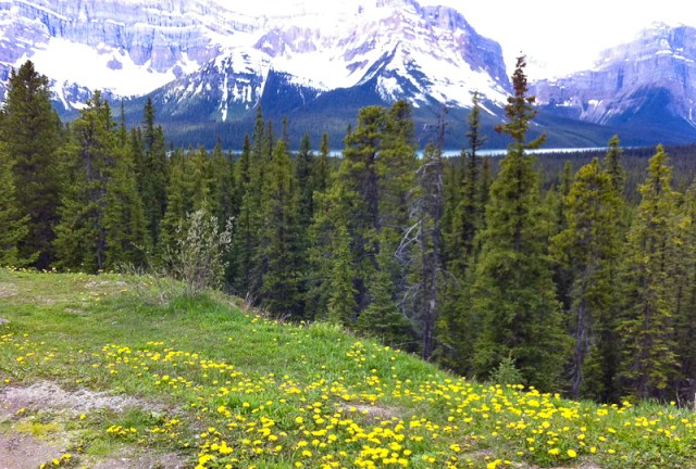 Driving the Icefields Parkway should be at the top of your list of things to do in Lake Louise!