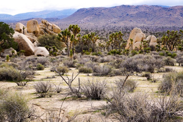 Hiking the Hidden Valley Trail is one of the fun things to do in Joshua Tree in California