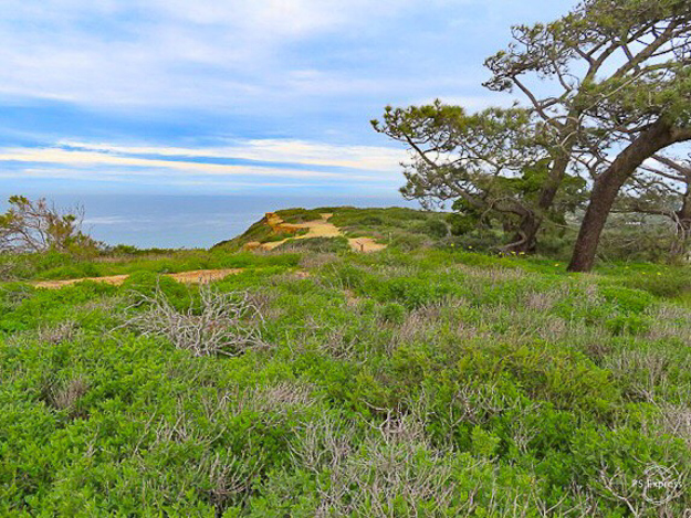 Landscape Cabrillo National Monument San Diego California