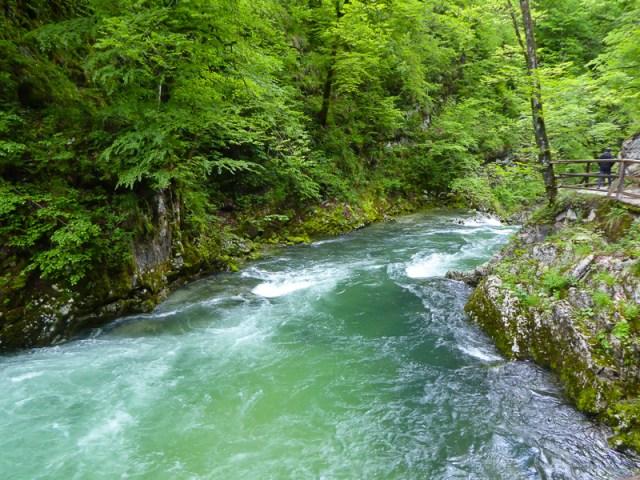 The Radovna River in Vintgar Gorge, Slovenia