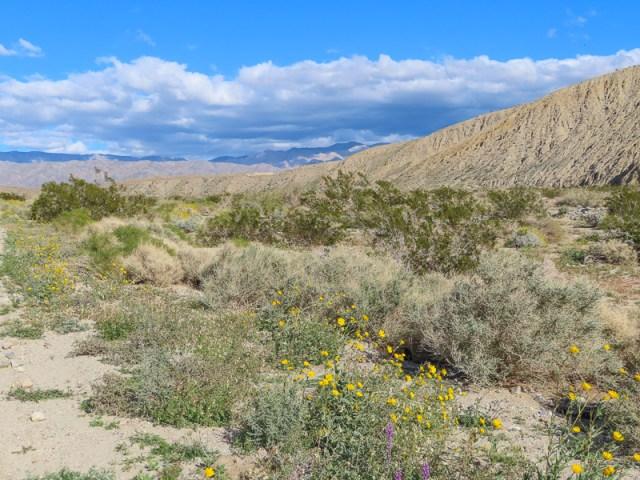 California Desert Landscape near Palm Springs
