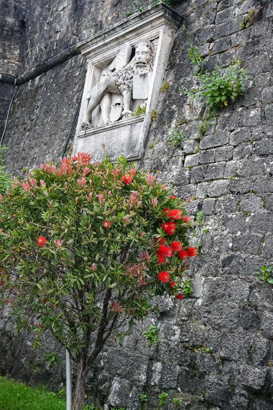Kotor Walls Montenegro