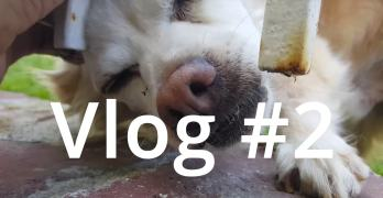 Vlog 2 – Visiting the Grandparents & Lessons From a 78 Year Old Internet Marketer