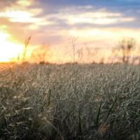 The Fallen-Grass