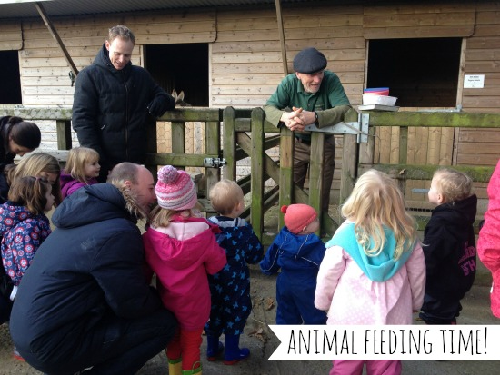 clydey-cottages-animal-feeding