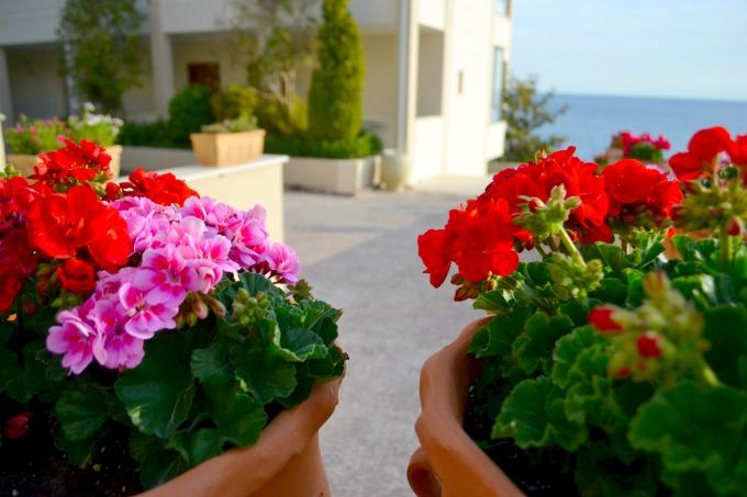 flowers-ikos-oceania
