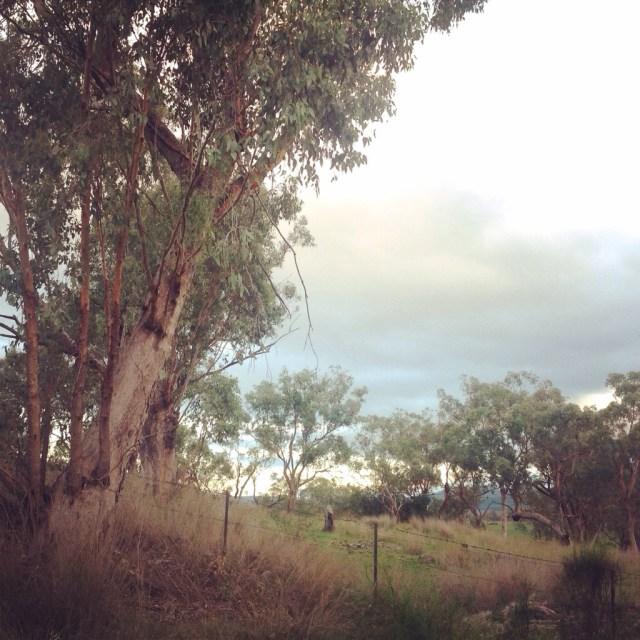 eucalyptus peel vally