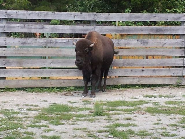 5 Things I Learned at Big Bone Lick State Park