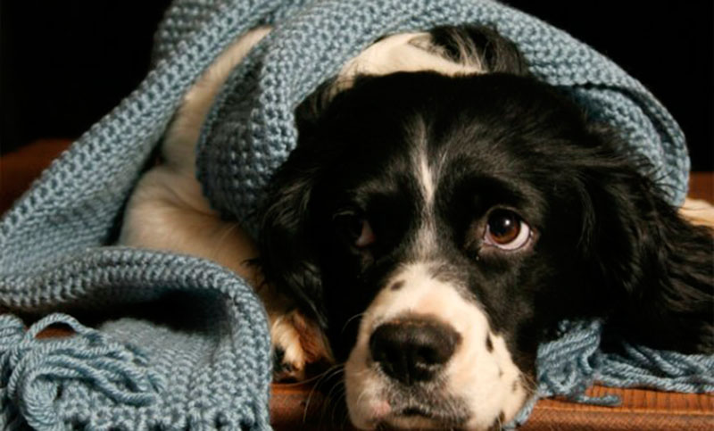 ¿Su mascota necesita un abrigo para el invierno?