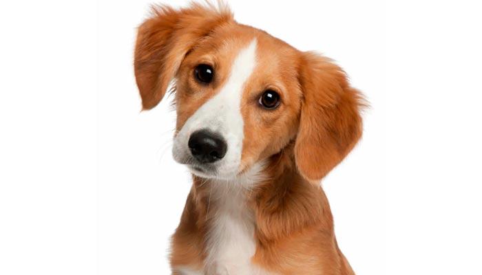 El perro mestizo es la mejor opción para invertir en una mascota
