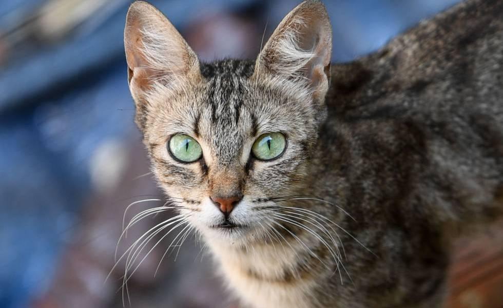 vidas tiene un gato