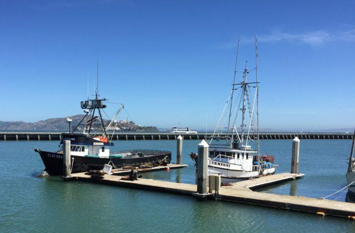 Leones marinos al lado de un barco de pesca en San Francisco