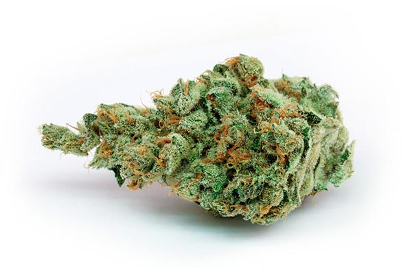 Cogollo de marihuana seco