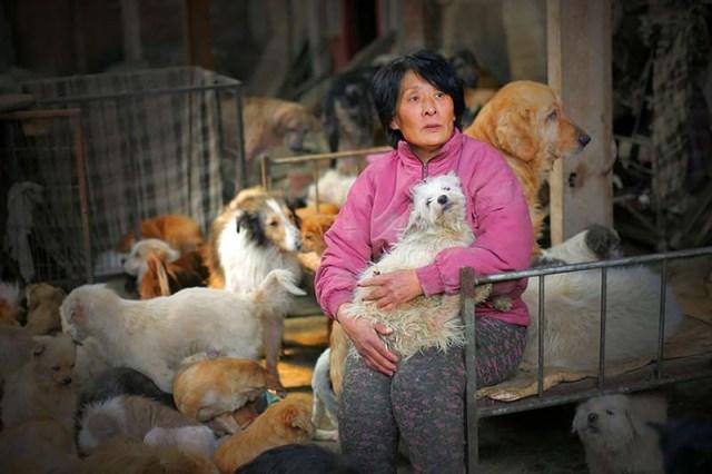 donna-saves-100-cani-Yulin-3