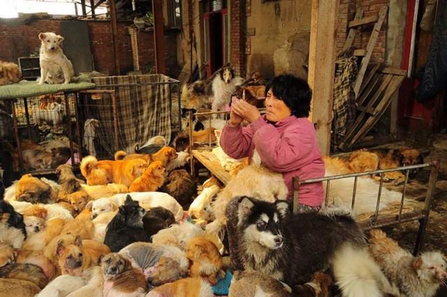 donna-saves-100-cani-Yulin-4